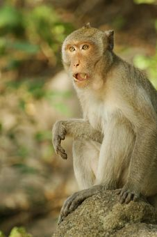 Free Startled Monkey Stock Photos - 6169553