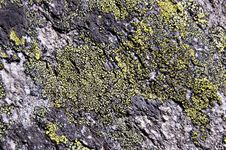 Free Lichen Rock Texture Stock Image - 6173271