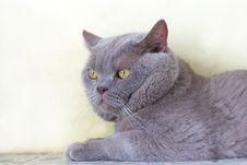 Free Cat Stock Photos - 6173553