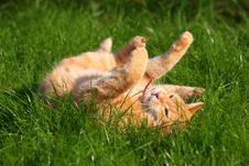 Free Spoted Cat Royalty Free Stock Photo - 6173715