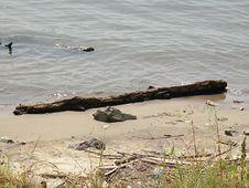 Free Log On The Shore. Stock Images - 6175154