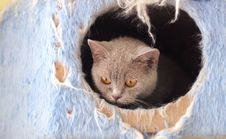 Free Cat Watching From Its Cote Stock Image - 6175321