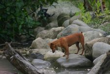 Free Stray Puppy Stock Photography - 6175472