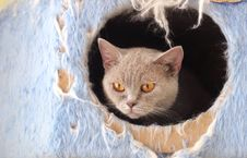 Free Cat Watching From Its Cote Royalty Free Stock Photos - 6175488