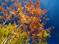 Free Autumn Colors Royalty Free Stock Image - 6176016