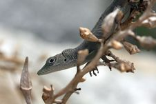Free Lizard And Branch  2 Stock Photography - 6176112