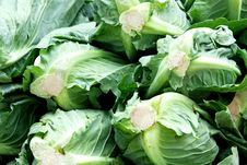 Free Cabbage Stock Images - 6177284