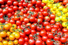 Free Cherry Tomatoes Royalty Free Stock Photography - 6177337