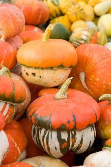 Free Pumpkin Royalty Free Stock Photography - 6177997