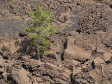 Free Tree On Volcano Stock Image - 6178151