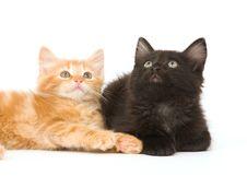Yellow And Black Kitten