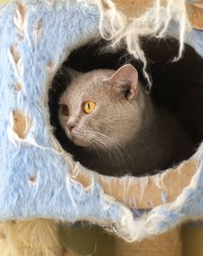 Free Cat Watching From Its Cote Stock Photography - 6179722