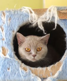 Free Cat Watching From Its Cote Royalty Free Stock Photo - 6179725