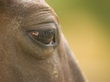 Free Horse Eye Close-up Stock Image - 6179751