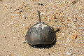 Free Sea Creature Royalty Free Stock Image - 6180426
