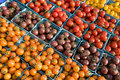 Free Tomatoes - Horizontal Royalty Free Stock Images - 6180549