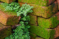 Free Moss Covered Bricks Stock Photography - 6183482