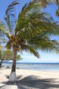 Free Palm Trees On A Beach Stock Image - 6189461