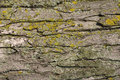 Free Tree Bark Texture Stock Photos - 6189933