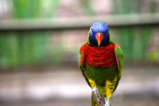 Free Colorful Parrot Royalty Free Stock Photography - 6180137