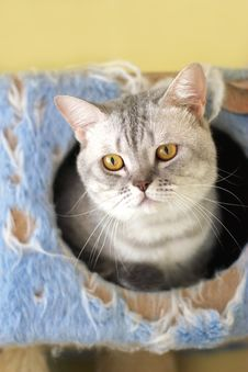 Free Cat Watching From Its Cote Stock Image - 6180581