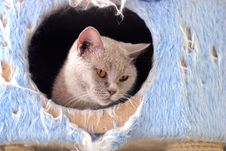Free Cat Watching From Its Cote Stock Image - 6180601