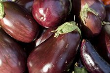 Free Eggplants - Horizontal Royalty Free Stock Photo - 6180605
