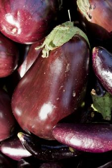 Free Eggplants - Vertical Stock Photo - 6180700