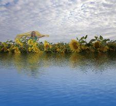 Woman On Sunflowers Field Stock Photo