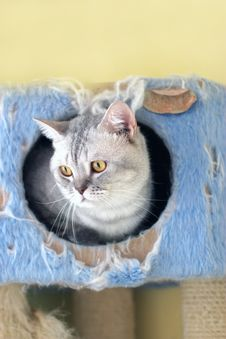 Free Cat Watching From Its Cote Royalty Free Stock Photos - 6182498