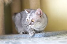 Free Cat Watching From Its Cote Royalty Free Stock Photography - 6182677