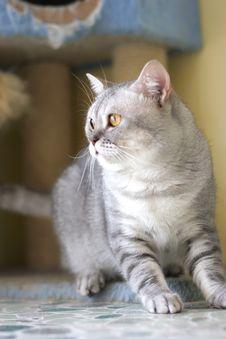 Free Cat Royalty Free Stock Photo - 6182695