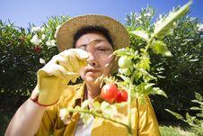 Free Gardening Stock Photo - 6182720