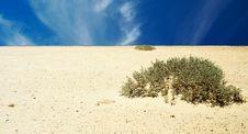Free Desert. Stock Image - 6183011