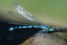 Free Blue Dragonfly And Shell 3 Stock Photo - 6183500