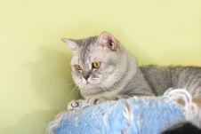 Free Cat Watching From Its Cote Royalty Free Stock Photo - 6183595