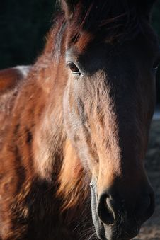 Free Horse Head  2 Stock Image - 6183781