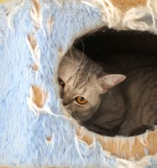 Free Cat Watching From Its Cote Stock Photo - 6184070