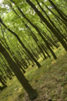 Free Forest In Dream Royalty Free Stock Images - 6184259