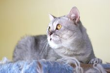 Free Cat Watching From Its Cote Royalty Free Stock Photos - 6184458