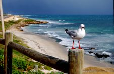 Free Stormy Seagull Royalty Free Stock Photos - 6184748