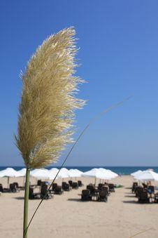 Free Beach. Stock Photography - 6185172