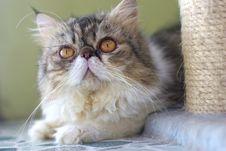 Free Cat Stock Photo - 6186580