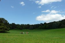 People Playing On The Meadow Royalty Free Stock Photo