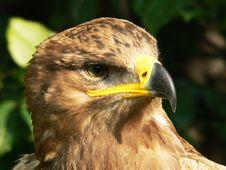 Free Brown Bird Royalty Free Stock Photo - 6187825