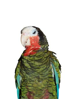 Free Parrot Royalty Free Stock Images - 6188079
