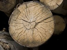Free Tree Cross Section Stock Photography - 6188352