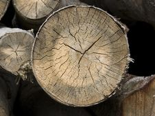 Free Tree Cross Section Stock Photo - 6188410