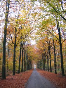 Free Autumn View, Holland Stock Photos - 6189133