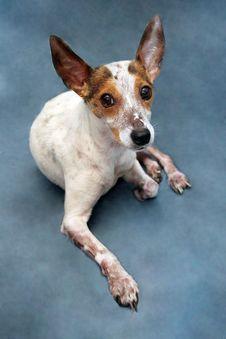 Free Dog Portrait Stock Photo - 6189350